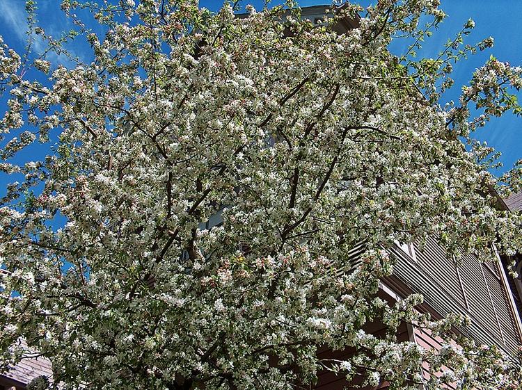 Spring 001-PV