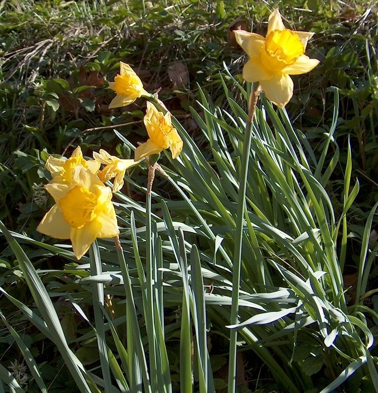 Spring 035
