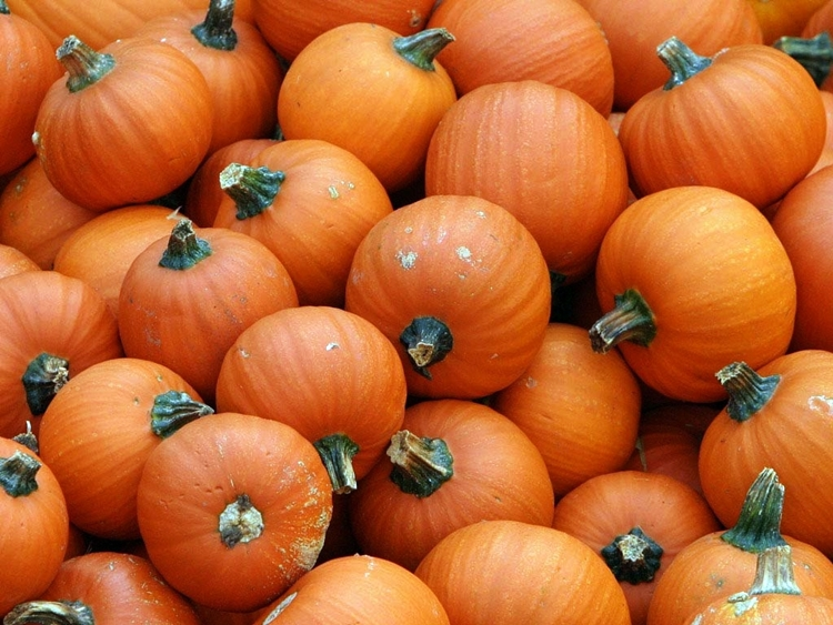 5027546-pumpkins-wallpapers-t-pv
